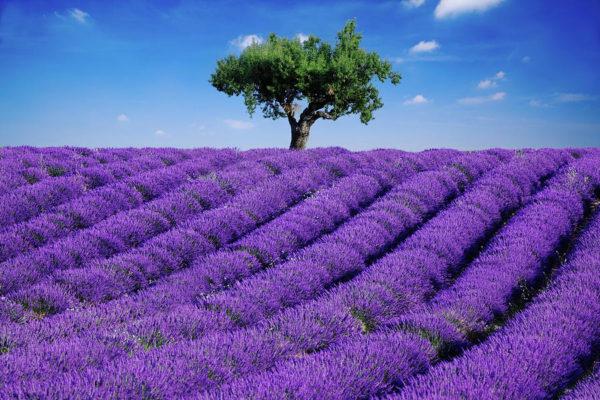 lavendel-binnenvulling-oogmasker