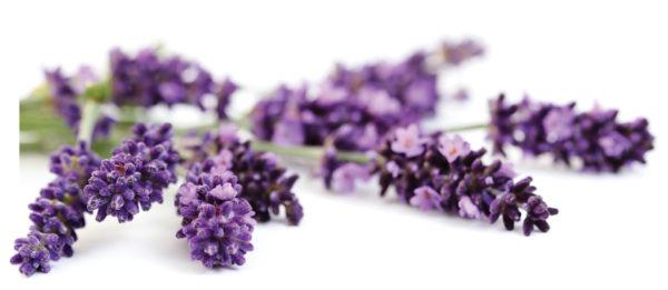lavender-eyepillow-filling